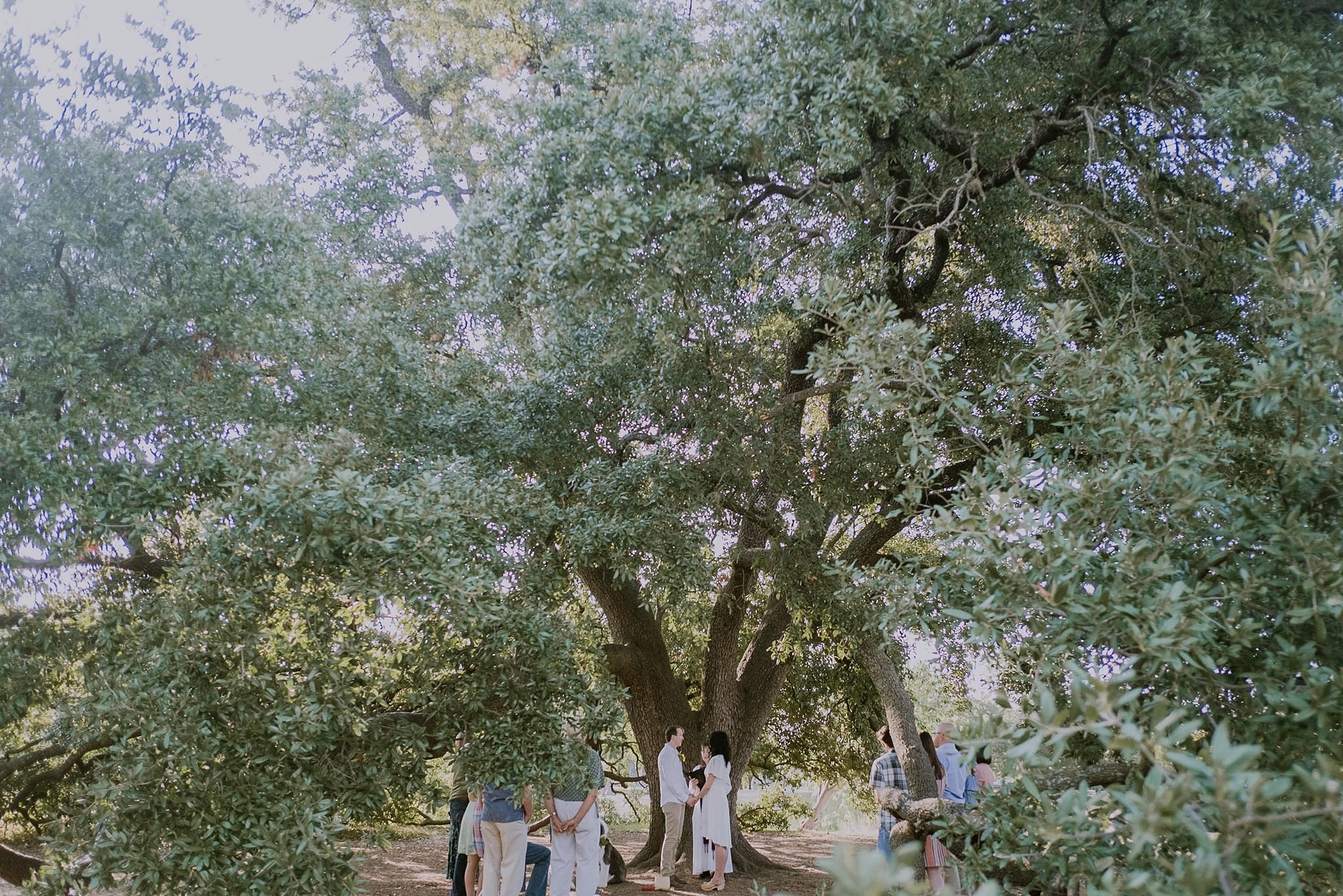 Central Park Austin Private Wedding Ceremony